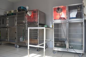 Hospitalisation chiens, chats, nacs à Baccarat